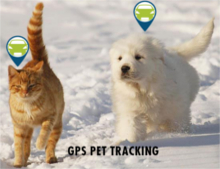 GPS Tracking Devices for Pets