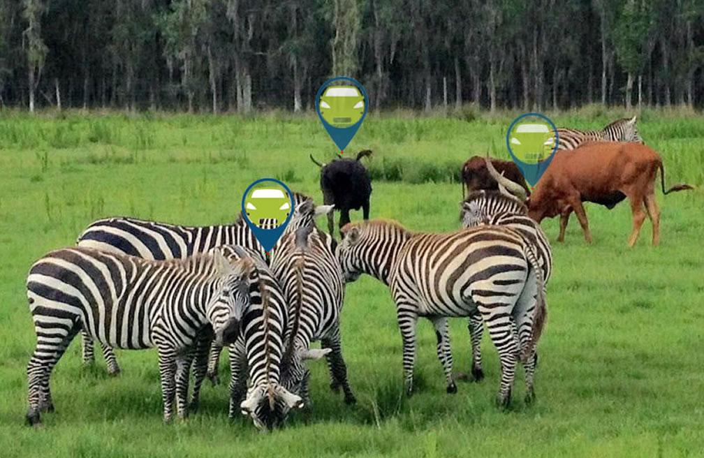 GPS Tracking Animals